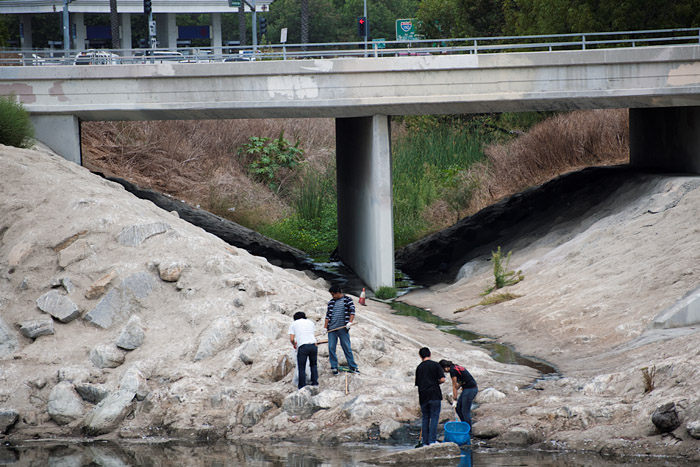 A group of Banning High School students use nets to collect debris from the channel south of Artesia Boulevard.