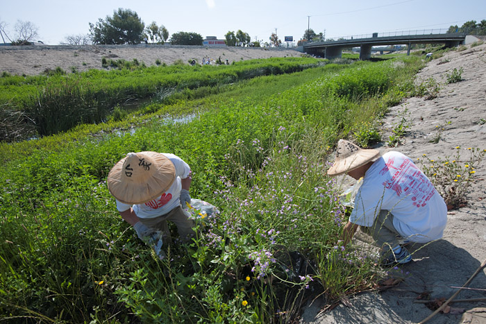 Taiwanese Americans from the Los Angeles area have volunteered at Compton Creek for the last eleven years.