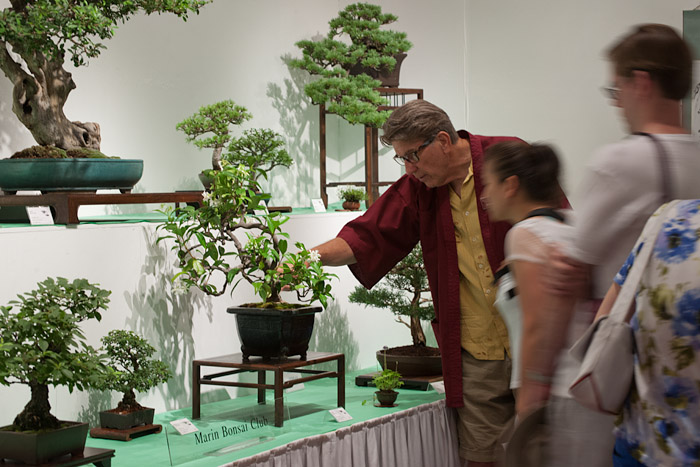 Bonsai exhibition sponsored by the Marin Bonsai Club