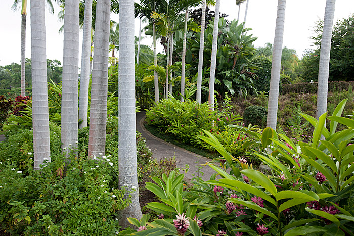 Garden at Mauka Meadows Coffee Farm, Holualoa