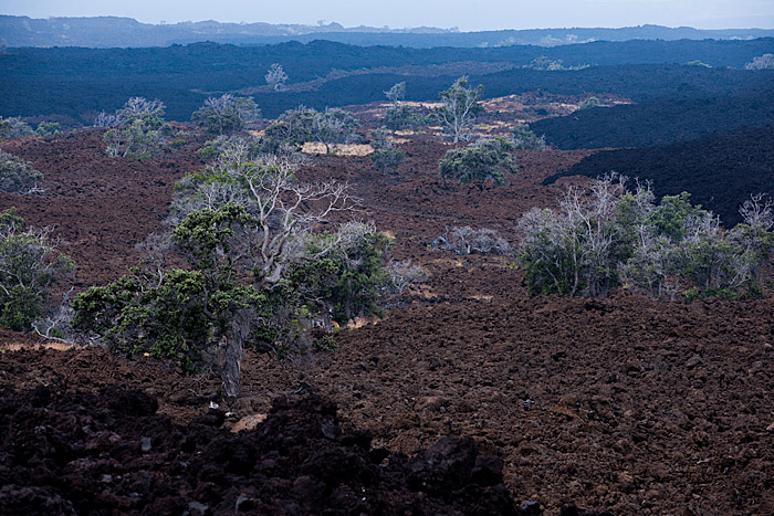 Reforestation over lava