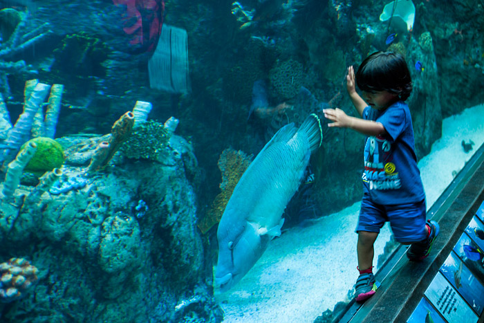 Aquarium visit on Seiji's third birthday, Long Beach